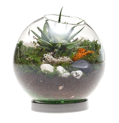 Table Top Terrarium - chive.com, $23.10